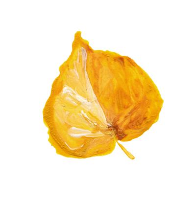 REcolorado Aspen Leaf